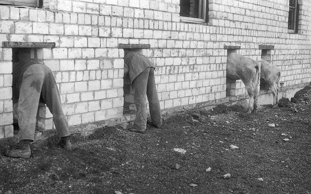 Строительство коровника, Красноярский край, 1984. Фотограф Павел Сухарев